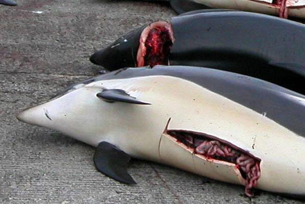 Queremos Cero Caza de Ballenas Ahora